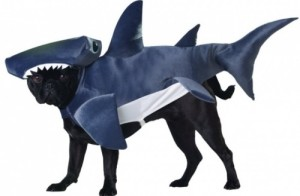 (Skipped Doggie Osama, so here's a shark.)